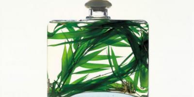 Bottigli di profumo naturale e delicata con foglie al suo interno.