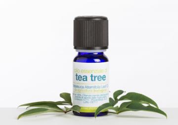 Olio Essenziale di Tea Tree - La Saponaria | La Saponaria