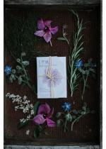 5 Petali Bagnodoccia ultradelicato per pelli secche | Ethical Grace